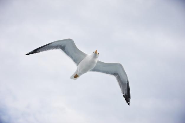 Чайка летит на облачное белое небо