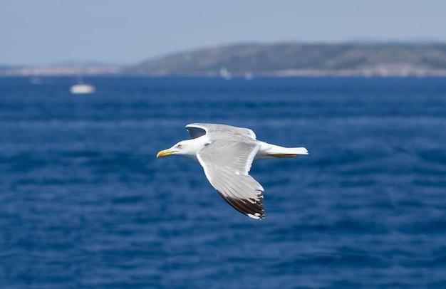 Чайка пролетает над фоном голубой воды. адриатическое море, хорватия