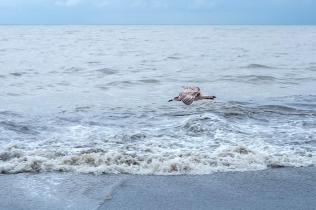 Чайка пролетает над черным морем