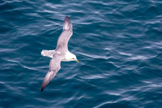 海面上空を飛ぶカモメ