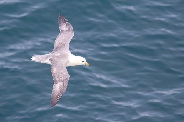 바다 표면 위로 비행하는 갈매기
