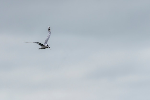 Seagull flying in the port of howth.