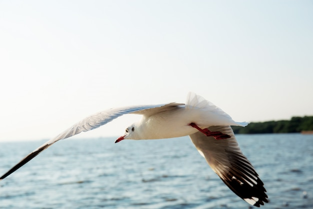Seagull flying at sea.