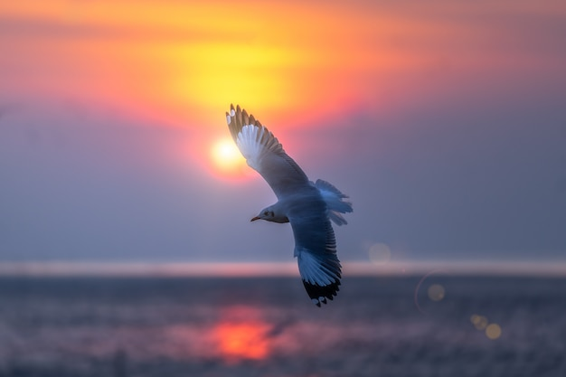 Seagull flying in the sky over the sea.