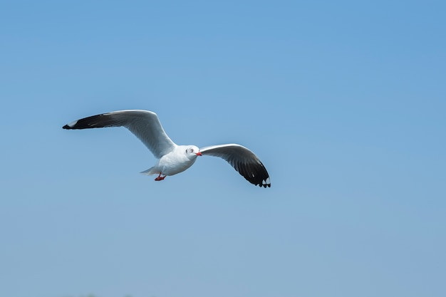 Seagull flying on sky