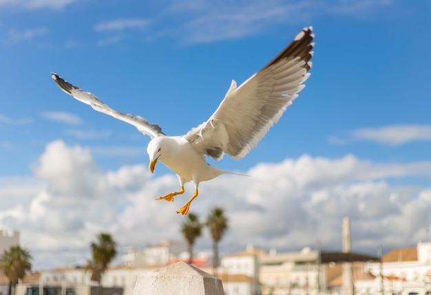 Seagull flying with blurred houses