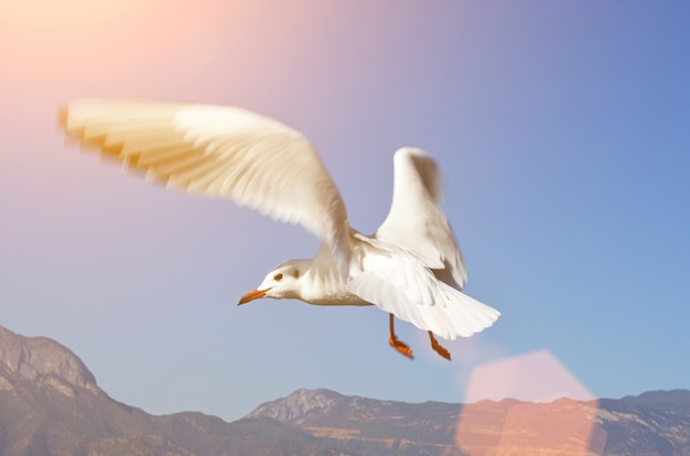 Seagull flying with the sky and mountains behind