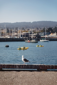 Seagull at harbour