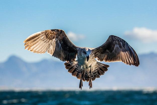 青い空と海岸線に対して飛行中のカモメ
