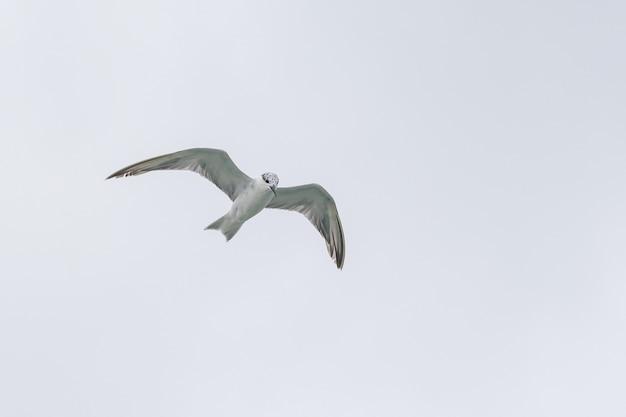 Чайка в полете против неба