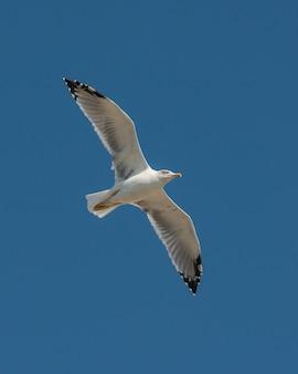 空を飛んでいるカモメ