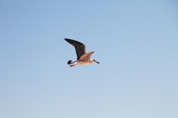 空のカモメ。飛行中の鳥。