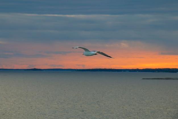 Чайка в небе, море, на фоне красного заката