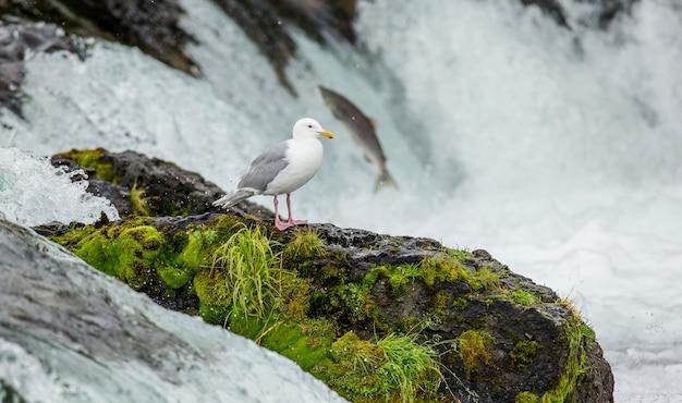 カモメは川の真ん中にある岩の上に立っています。