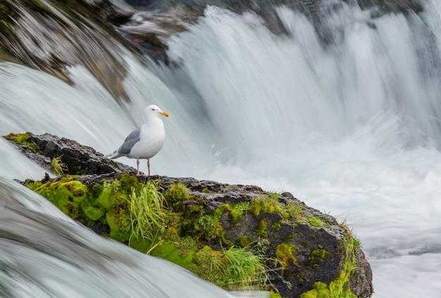 Чайка стоит на скале посреди реки.