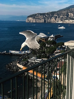 Seagull in italy
