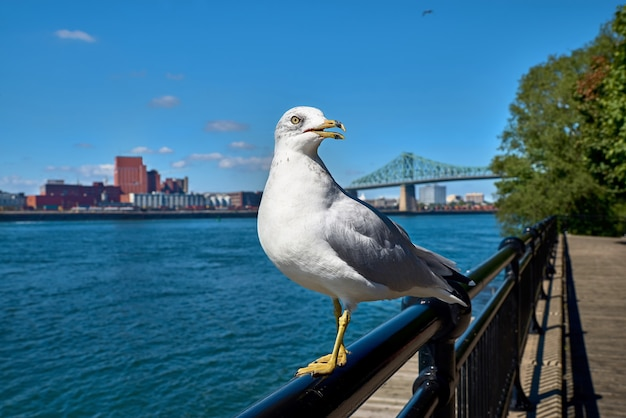 Seagull looking. view of the river and city