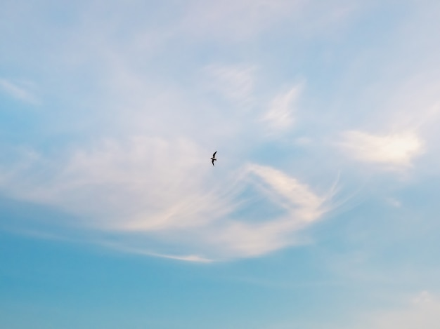 Seagull in motion silhouette of a flying bird in the blue sky