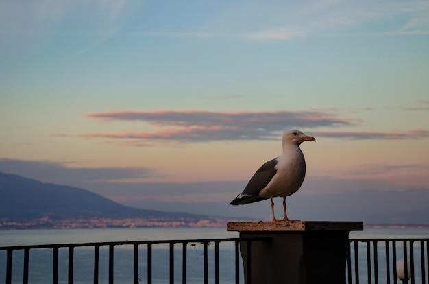 Seagull on mount vesuvius background on splendid colorful