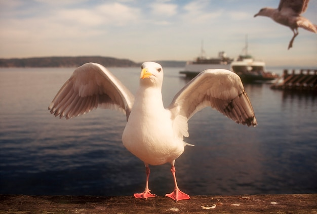 Seagull at ocean waterfront flapping wings with ferry in background