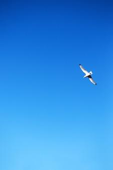 푸른 하늘을 배경으로 갈매기