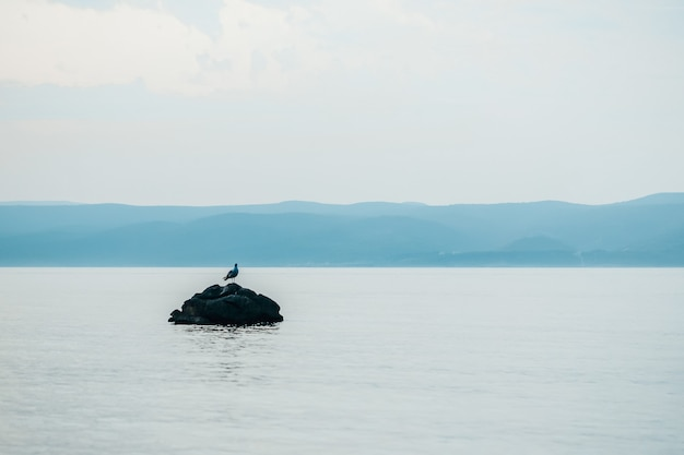 海の石のカモメ。