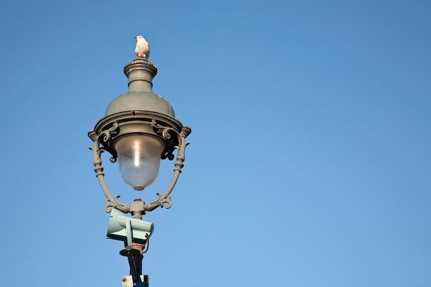 Чайка на фонарном столбе, париж