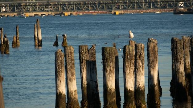 Gabbiano appollaiato su una colonna in un molo al mare