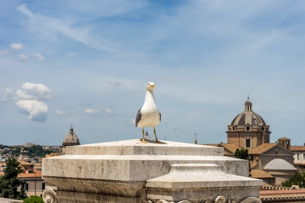 Seagull perched in front of a building in rome, italy