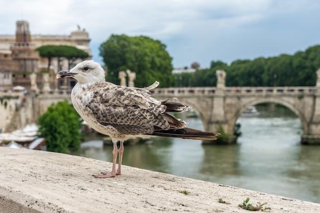 イタリア、ローマの曇り空の下、湖のほとりの石垣に腰掛けたカモメ