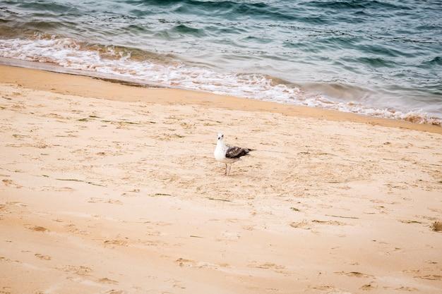 ビーチに腰掛けてカモメ