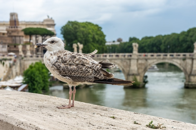 Seagull perched on a stone wall by the lake under a cloudy sky in rome, italy