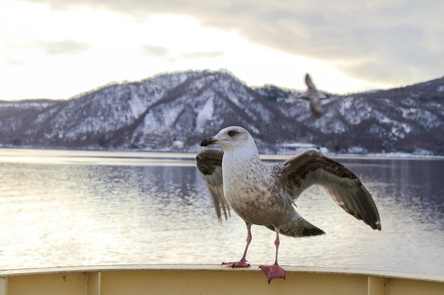 홋카이도에서 유람선의 손잡이와 겨울에 산의보기에 그친 갈매기