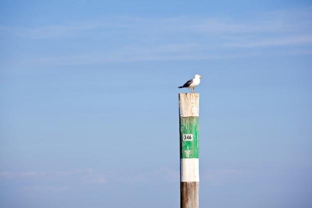 Seagull on the pole,