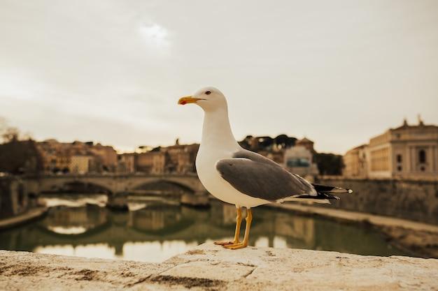 古い歴史的な場所でローマの川の近くでポーズをとるカモメ