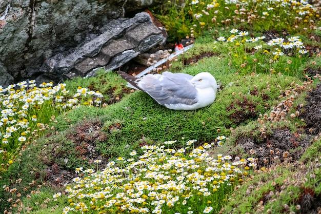 꽃과 절벽에 풀밭에서 쉬고 갈매기.