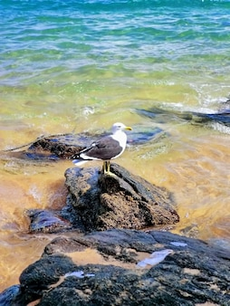 Seagull on the rocks of the beach