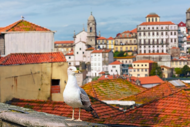 Seagull and rooftops of old town, lisbon, portugal