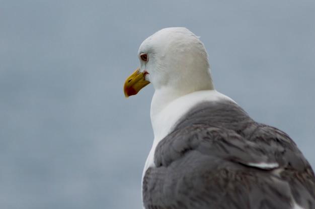 Seagull sadness