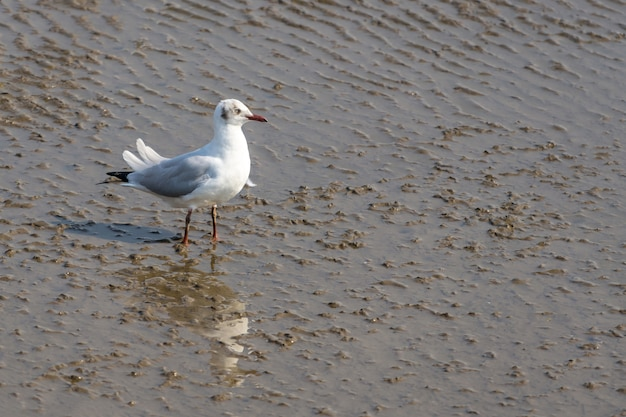 Seagull on sand