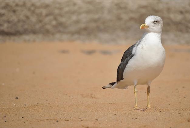Seagull on the sea