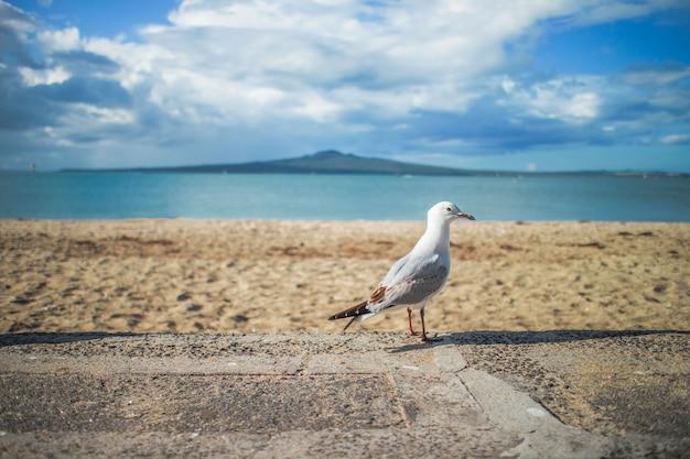 シーガル、海岸、飛行、自由、屋外