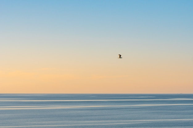 잔잔한 바다 위의 맑은 빛 하늘에 갈매기 실루엣. 흑해의 바다.