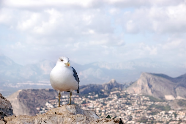 A seagull sits on a rock on top of a mountain, a landscape in the background