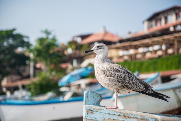 Seagull sitting on the boat