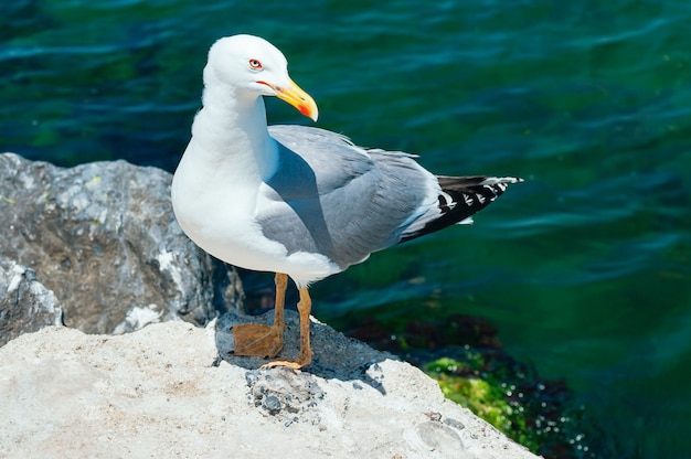 Seagull sitting on the rock