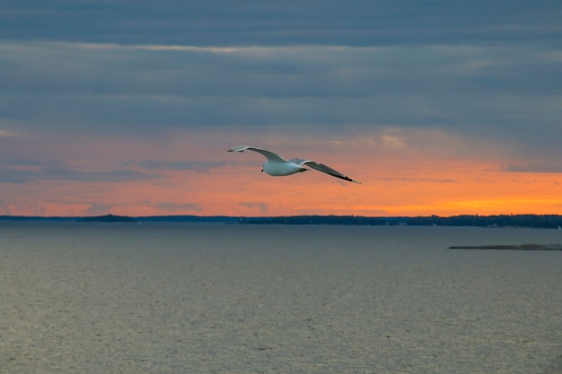 Seagull in the sky, the sea, on a background of red sunset