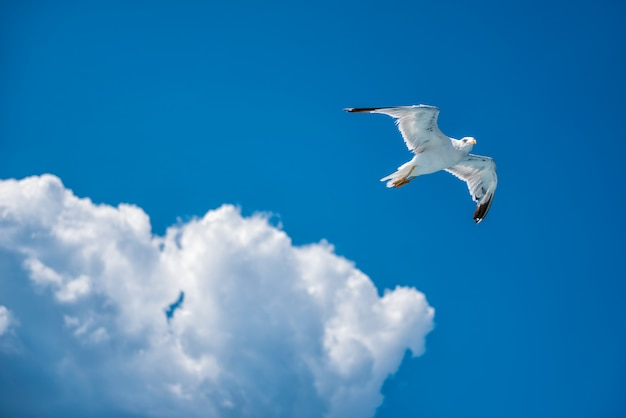 Seagull soaring in open sky