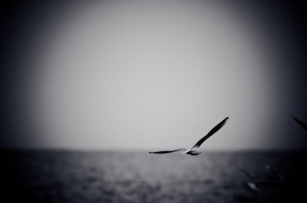 Seagull soaring over sea. Black and white photo with film grain effect