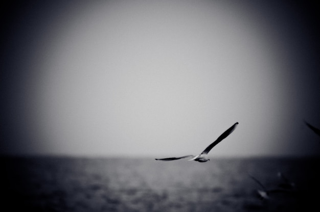 海上で浮上するカモメ。フィルムグレイン効果を持つ白黒写真